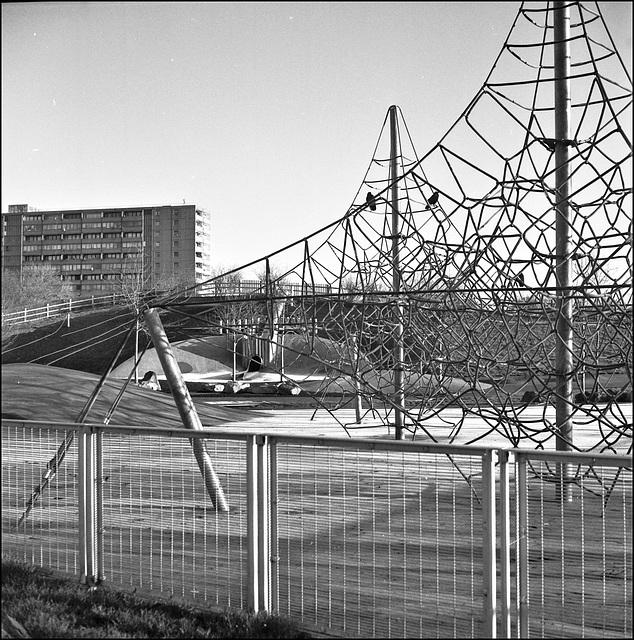 Crows, playpark, Burgess Park.