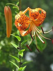 Orange beauty ..
