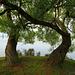 Twisting Trees