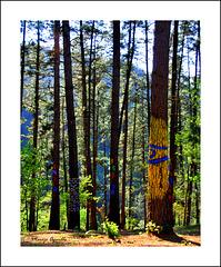 El bosque animado de Oma