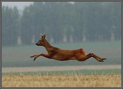 le grand saut ......