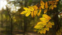 Het Goor, Herfst