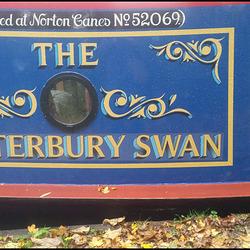Canterbury Swan