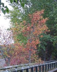 gbw - leaf colours