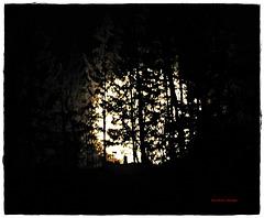 Der Mond hinter Bäumen am Berg
