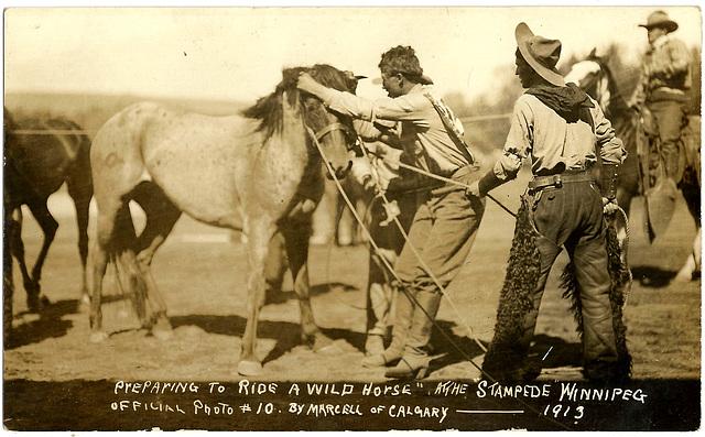 WP1898 WPG - STAMPEDE (PREPARING WILD HORSE)