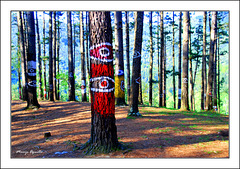 Cuidado! el bosque te vigila.