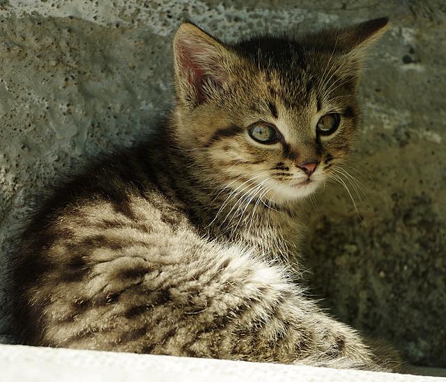 Katz jung