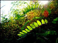 """Un petit """"vert"""" à la santé de ce bel automne.. [ON EXPLORE]"""