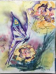 Aquarelle :  Papillon N° 1