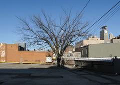 Good tree of downtown Toledo.