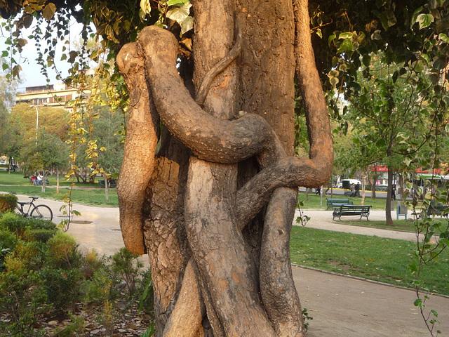 El árbol del abrazo