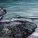 im Oceanogràfic Valencia (© Buelipix)