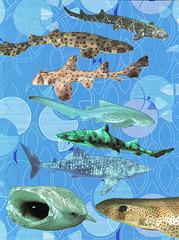 spots on sharks