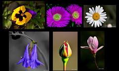 Collage de flora