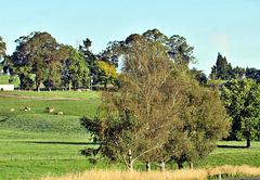Pleasant Farmland Scene.