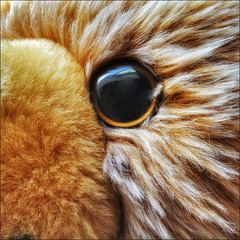 In the eye of the bear