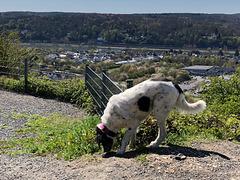 Luna macht eine großen Spaziergang
