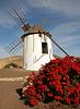 Windmühle in Tiscamanita