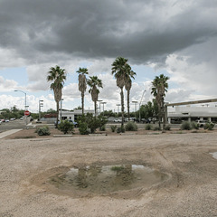 "Tucson's ""Badwater Pools"" landform reflects the treetops of ornamental street palms."