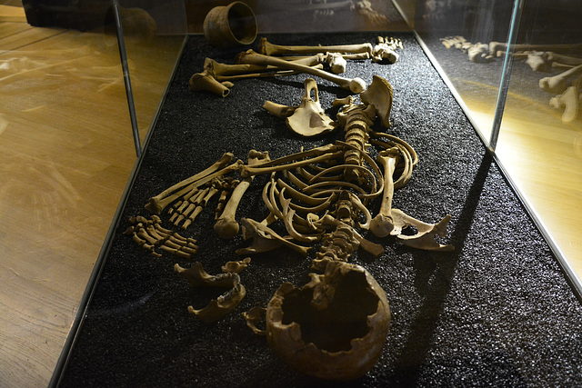 Rijksmuseum van Oudheden 2015 – Skeleton