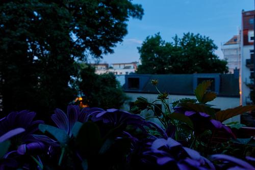 Blaue Stunde in Hamburg -abendhimmel-05106-co-16-05-18