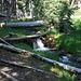 Lehman Creek