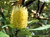 Wonderful Wild Flower