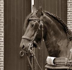 Pferdeschwanz-Vorbild (PiP) Role model