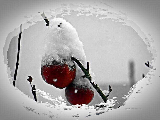 Apfel im Schlafrock