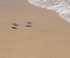 Strandlaufen im Duett - Course de plage en duo :-)...