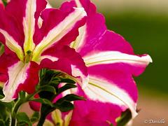 Pour fleurir votre dimanche….