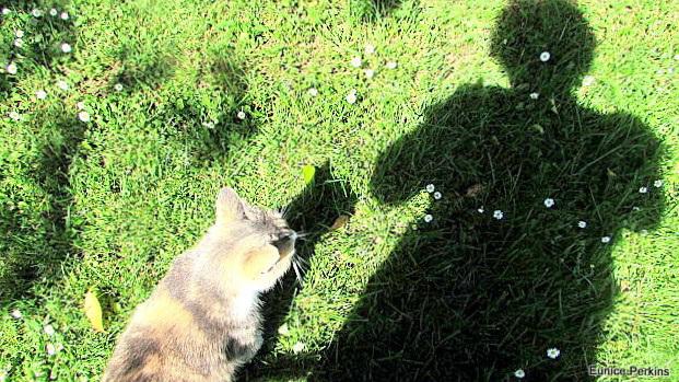 Shadow Selfie.
