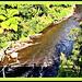 Tangarakau River
