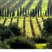 Toscane gardoise
