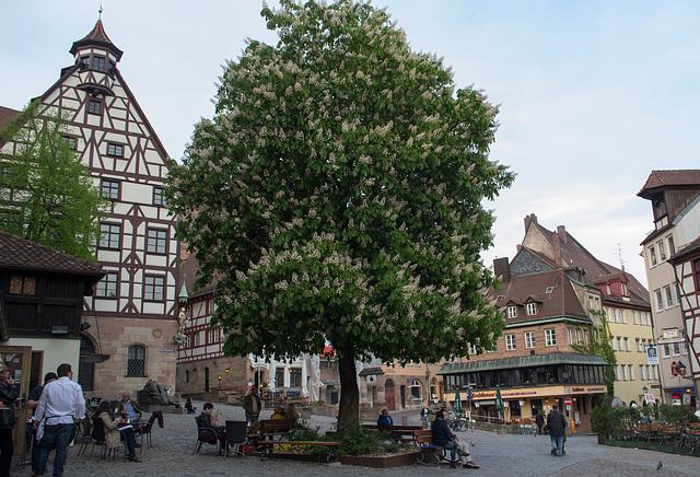 Nuremberg old town (#2777)