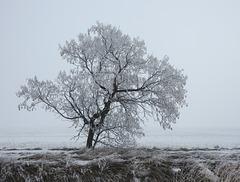 Hoar frost tree and vanishing fields