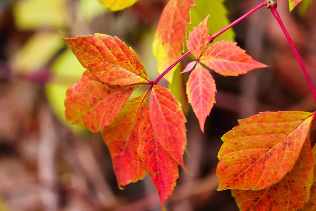 1 (5)...austria herbst autumn