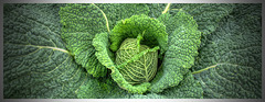 Green Cabbage II