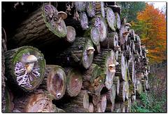Baumstämme | Pilze