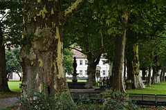 Wandeln im Schatten alter Platanen - Walking in the shade of old plane trees