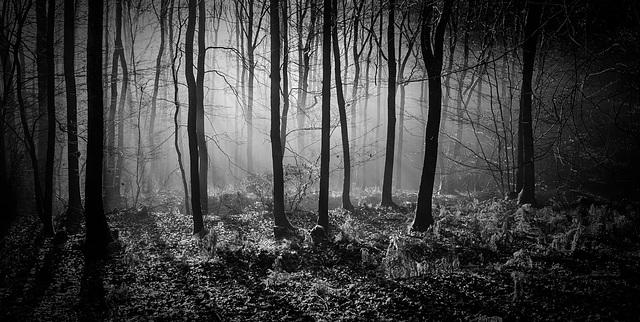 Wald der Ängste