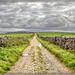 A Dales Lane