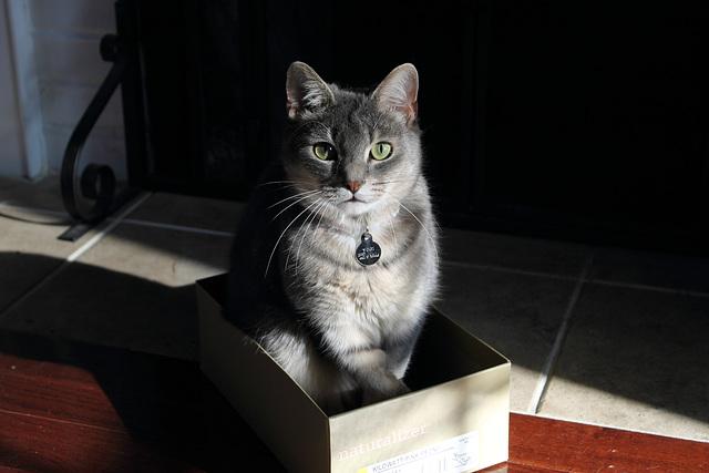 what? it's a box