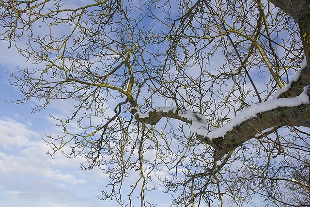 branches et brindilles