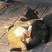 20151212 144139Hw [R~TR] Katzen, Bauernmarkt, Selcuk, Türkei