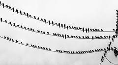 THE REVOLT OF THE BIRD HUNTERS