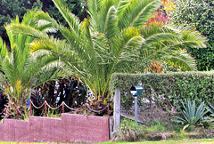 Fence and Tree Ferns.