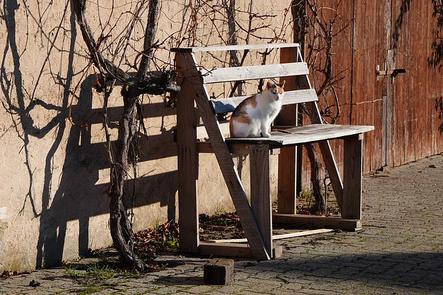 Diese Katze soll Glück bringen - This cat is supposed to bring luck