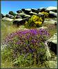 Granite, broom, gorse and lavender.